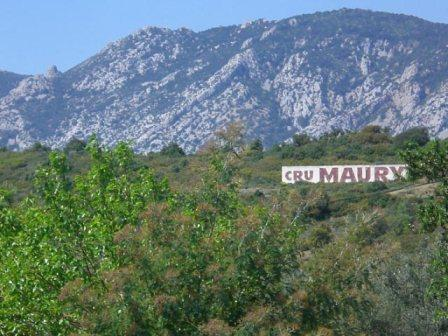 Paysage - Cru Maury